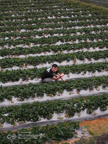 大湖草莓之旅 - 大力推薦 大山農園 R1039346
