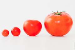 Tomato Evolution (thedot_ru) Tags: life stilllife kitchen tomato cherry geotagged still tomatoes canon5d showcase cherrytomato 2011