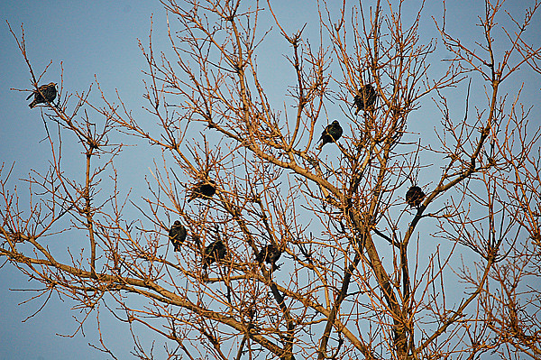 birds-in-tree