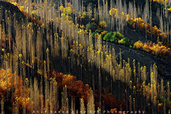 Symmetry.... (M Atif Saeed) Tags: autumn trees pakistan mountain mountains fall nature yellow landscape glow sony symmetry formation leafs gilgit gupis atifsaeed gettyimagespakistanq1