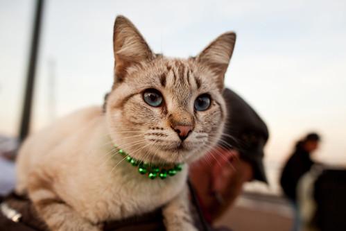 New Orleans Hobo Cat