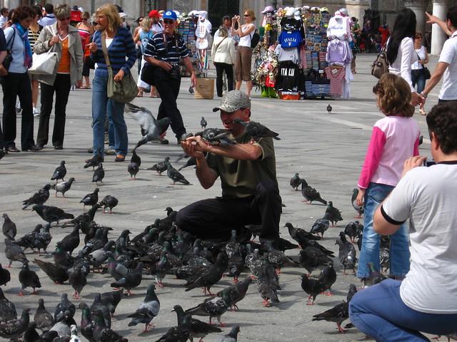 サン・マルコ広場のハトのフリー写真素材