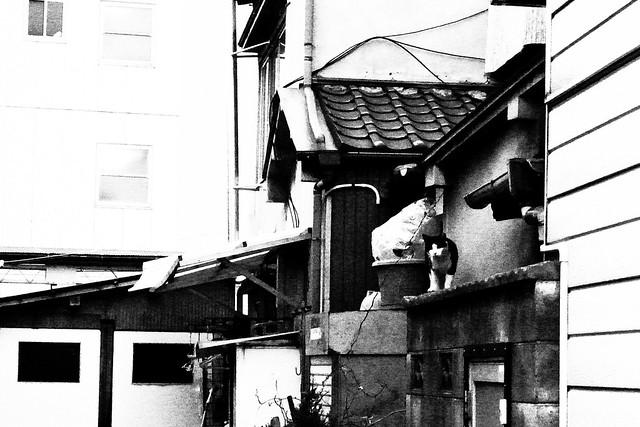 Today's Cat@2011-02-08