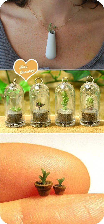tinyplants