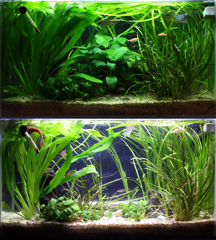 Tank 1: Before and after pruning