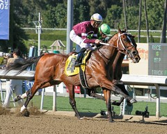 Headstrong (kimpossible pics) Tags: horse jockey horseracing racehorse thoroughbred arcadia equine santaanita santaanitaracetrack garrettgomez tapizar robertblewisstakes steveasmussen winchellthoroughbreds