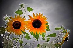 Amor entre flores...:) Love between flowers...:) (Zéza Lemos) Tags: canon amor natureza natur flor jardim nuvens amizade algarve amistad vilamoura sanvalentín mygearandme svatentim