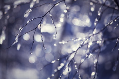 (koinis) Tags: blue winter 2 ice canon john branch bokeh mark explore ii twig l 5d 70200mm f4l koinberg koinis