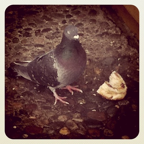 My co-workers laughed at me as I took a photo of this pigeon & his bagel buffet.