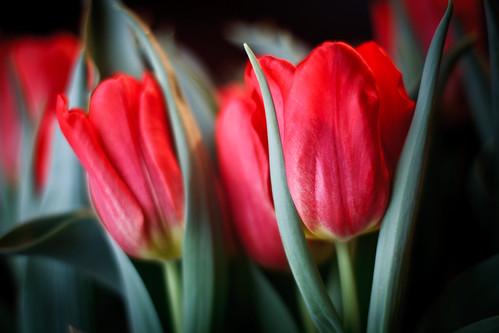 flowers-1713.jpg