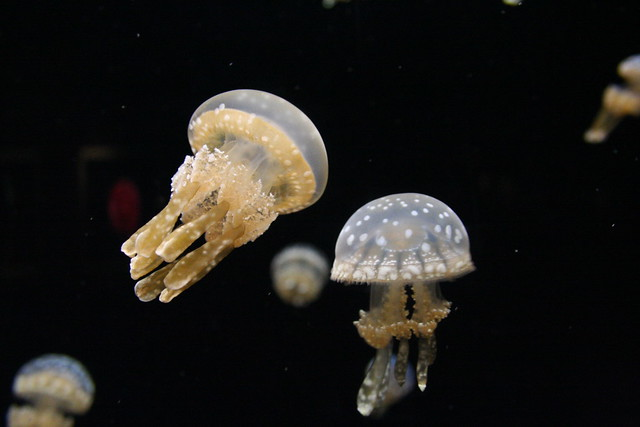 Jellyfish from 2005