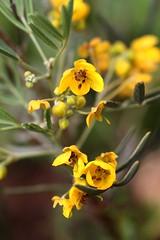 Fresh yellow (Gaby.Bernstein) Tags: flower macro nature yellow closeup spring gaby bernstein bernsteingaby gabybernstein