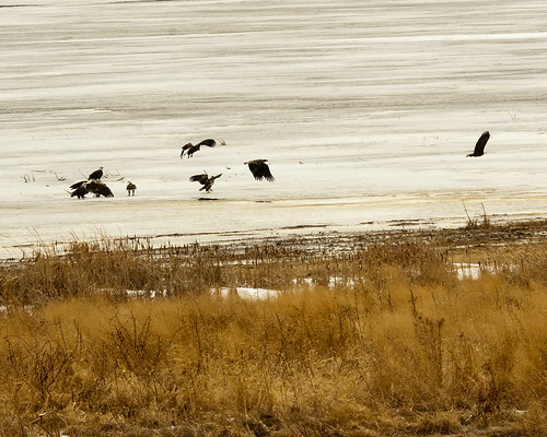 02172011JGW-EaglesThompsonLakeWetland_MG_2561