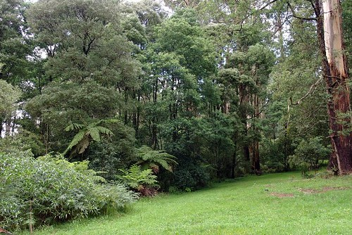 The Dandenong Ranges, Belgraves - Victoria, Australia (1)