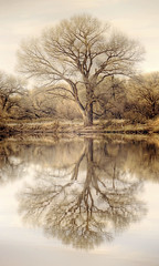 As Above So Below 2 (Eric Vondy) Tags: arizona lake reflection tree texture water cochisecounty naturepoetry kingfisherpond singleexposurehdr sanpedroriparianpreserve redmatrix alchemenicalreferences