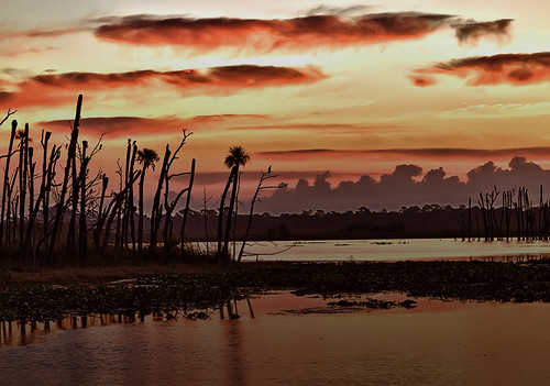 Orlando Wetlands Sunrise
