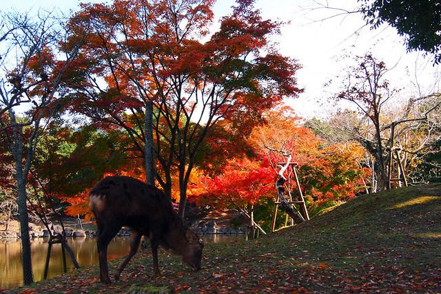 20101116_115438_奈良公園