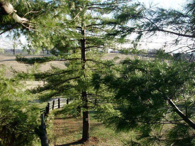 tree climbing 045
