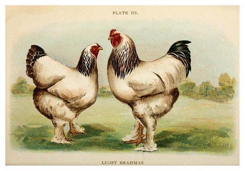 021-Biggle poultry book…1909- Jacob Biggle