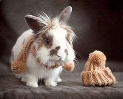 [フリー画像] 動物, 哺乳類, ウサギ科, 兎・ウサギ, 201103101700