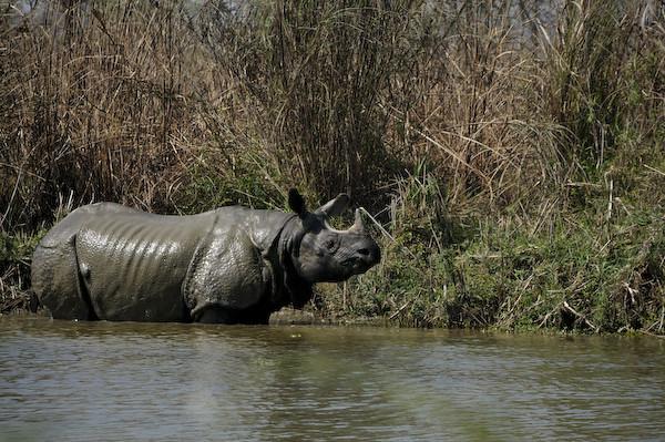 RhinoLb5561
