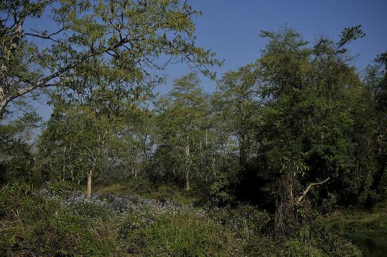 forestA5465