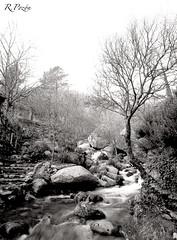 Fall (R.Pozn www.rpozon.es) Tags: espaa tree 120 mamiya film rio rock del river de landscape arbol spain ruben valle paisaje leon pelicula roca cuevas castilla c45 pozon rpozon wwwrpozones