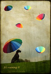 It's raining !!!!! (aenee) Tags: rain textures umbrellas regen rainbowcolours bluegreatdane aenee parapluus borealnz memoriesbook regenboogkleuren artistictreasurechest xziva blauweduitsedog magicunicornverybest magicunicornmasterpiece imageourtime netcityart lenabemanna exploreworthychallenge15umbrella 3rdplaceexploreworthychallenge15umbrella