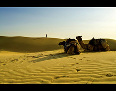 Somewhere in the middle of nowhere... (PNike (Prashanth Naik..back after ages)) Tags: blue sunset shadow sky india animals silhouette sand nikon desert dunes camels jaisalmer rajasthan jaysalmer pnike