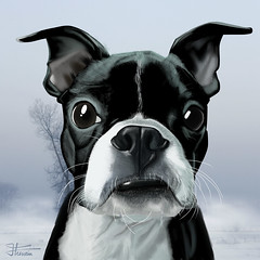 "Mar 16 2011 [Day 135] ""Jack"" (James_Seattle) Tags: boston jack bostonterrier march 365 hussein k9 year1 drwaing 2011 jamesseattle crimsonite"