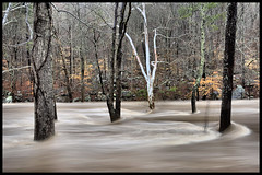 High Water at Buck's Pocket. (BamaWester) Tags: trees water river flood alabama hdr raging buckspocket bamawester napg