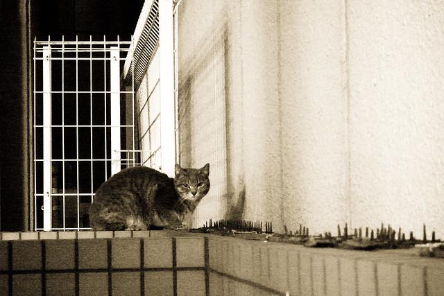 Today's Cat@2011-03-17