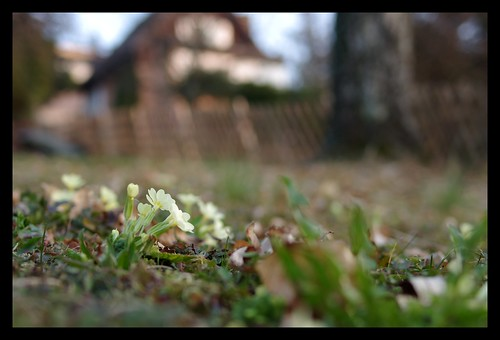 http://farm6.static.flickr.com/5094/5535116400_cfdef7e9b2.jpg