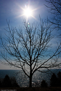 Sun star and tree
