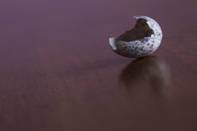 sparrow egg5