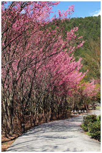 2011-03-04 陽明武陵 242 r