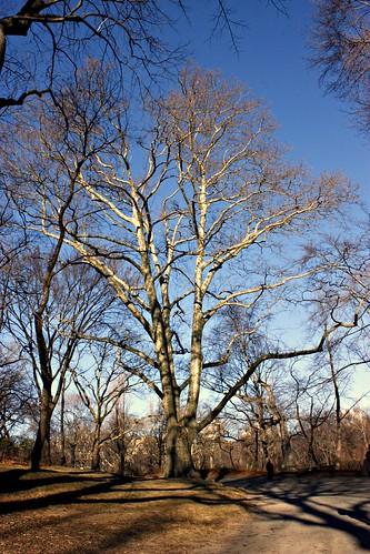 Park March 2 071