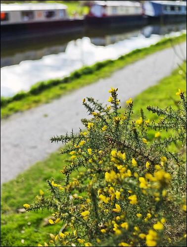 Leica M9 Voigtlander 35mm f/1.4