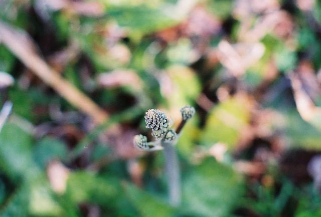 bud, herb garden