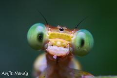 Smile Plz (AvijitNandy) Tags: