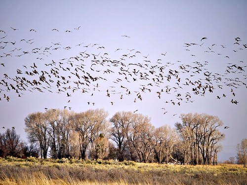 Cranes over Southern New Mexico, Larry Calloway
