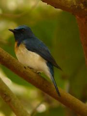 P1150830 (babsybou) Tags: travel india birds silent watching kerala du valley yatra sud inde attapadi birdswatching babsybou malleeshwaramjunglelodge pettickal