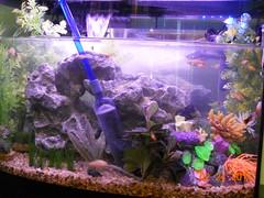 fish aquarium 2011february