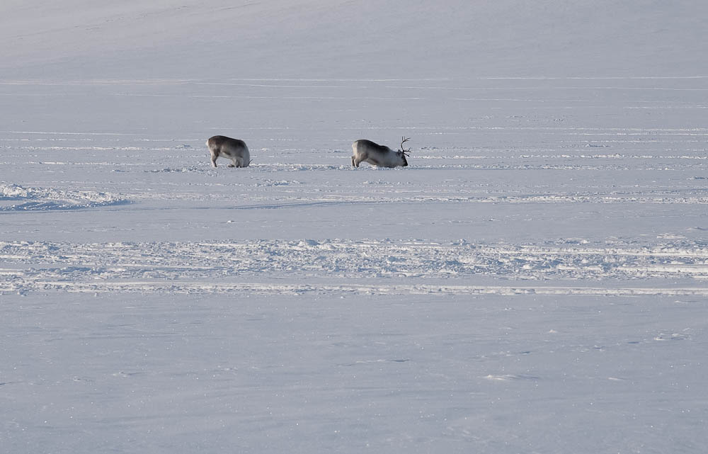 Svalbard 2010