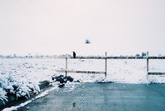 The birds (Mindro) Tags: winter snow birds bleak crows desolate