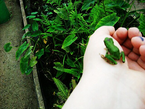 My Frog Experiment