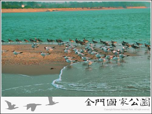 裏海燕鷗-02.jpg