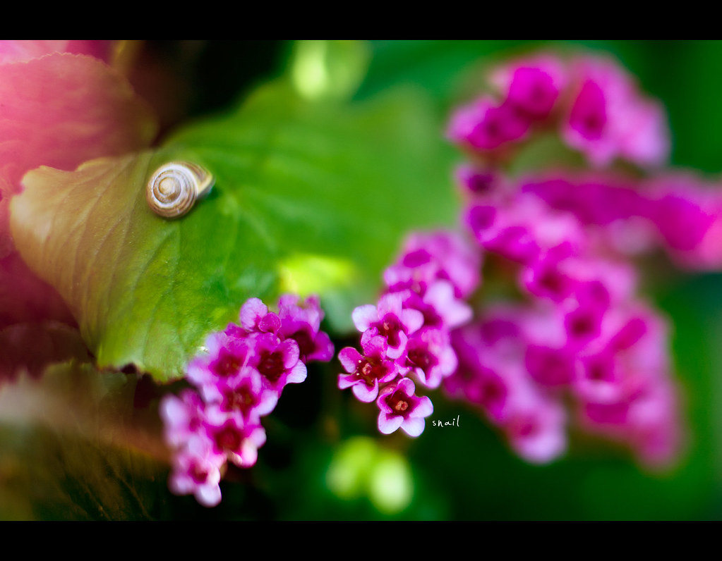 Project 365, 244/365, Day 244, bokeh, snail, flowers, colours, freelensing, Sigma 50mm F1.4 EX DG HSM, 50mm, 50 mm,