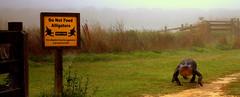 La Chua Trail Stroll (gatorgalpics) Tags: