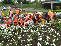 "2011 ""Welcome to Washington"" sign planting"